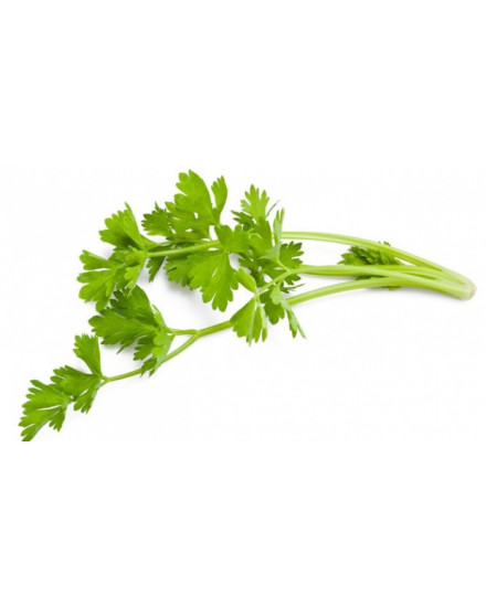 Celery ( Seledri )