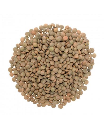 Lentil Coklat ( Brown Lentils ) 500gr